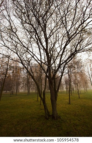 the trees growing in park in foggy morning. spring - stock photo