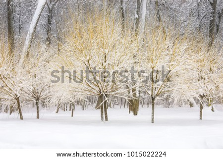 the trees in the Park in winter shrubs like sparklers a beautiful winter landscape