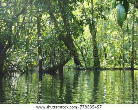 The trees in the river are beautifully lush. Nature should be preserved. To travel in fresh air.