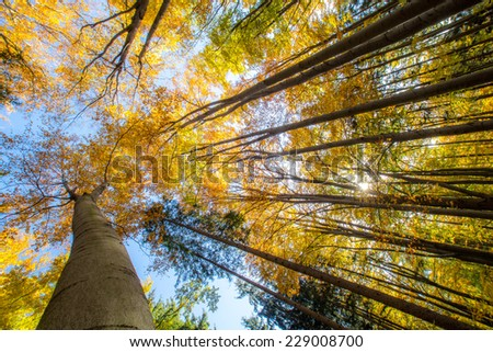 The trees with colorful leaves in autumn - stock photo