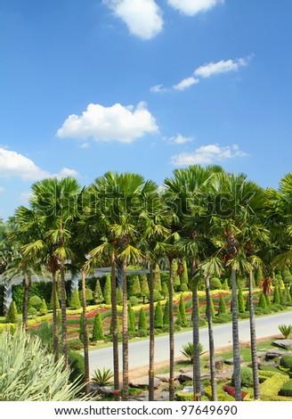 The tropical garden in pattaya, at Chonburi Thailand - stock photo