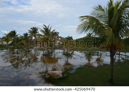 The tropical nature of the Caribbean Sea. Coconut palms in Cuba are reflected in the rain puddles.