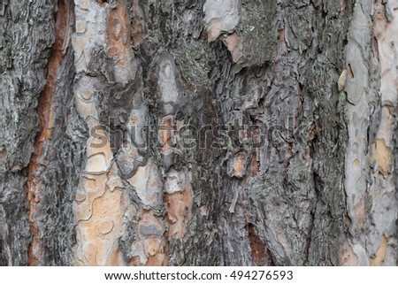 The trunk of a pine texture