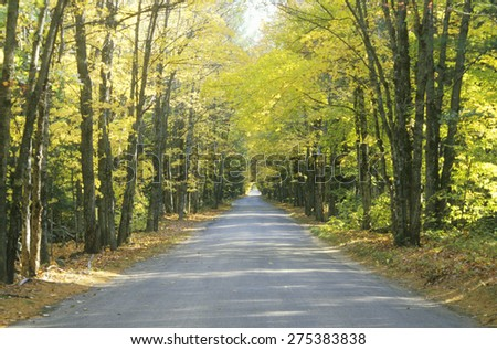 The turning of leaves on an autumn day in New England - stock photo