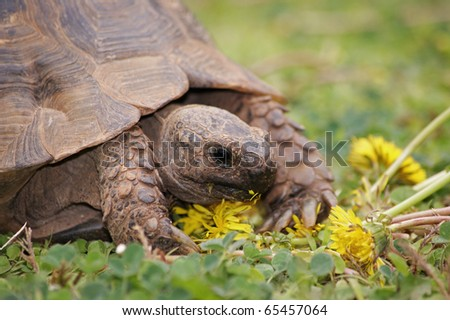 The Turtle - stock photo