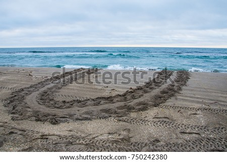 The turtle that changed her mind - a turtle track on the beach of a female that climbed the dune and turned around and went back into the ocean