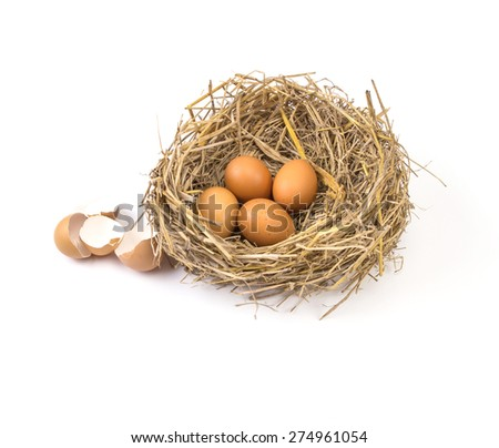 the twigs nest with brown chicken eggs with broken and empty shell egg - stock photo