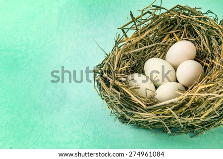 the twigs nest with white egg - stock photo
