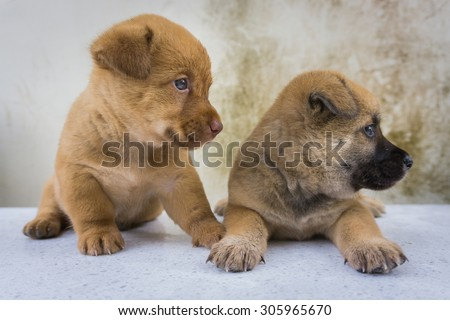 The twin puppies