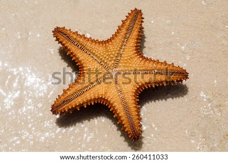the underside of a red starfish