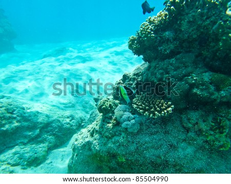 The underwater world - stock photo