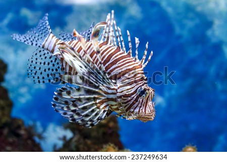 Underwater image of tropical fishes stock images royalty free the underwater world bright exotic tropical coral fish in the red sea artificial environment of publicscrutiny Images