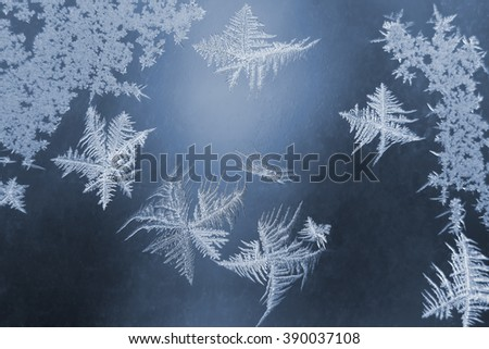 the unusual frost on a winter window