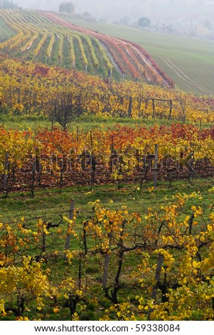 the vari-coloured fall vineyard in Moravia - stock photo