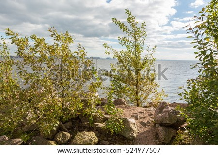 The vegetation of the Finland Gulf
