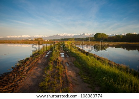 The Vercelli rice fields with the Alps in background and reflection - stock photo