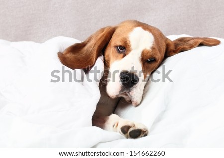 The very  sick dog under a blanket - stock photo