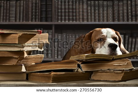 The very smart dog in old  library - stock photo