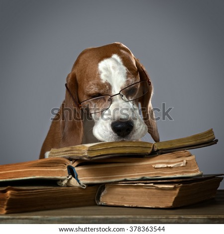 The very smart dog studying old books
