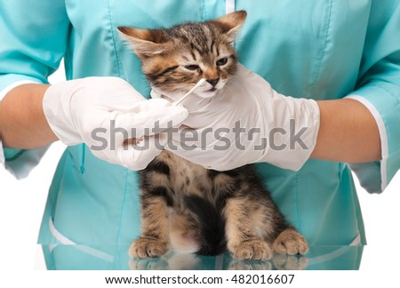 The veterinarian survey of a small kitten over white background