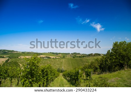 The vibrant colors of Agricultural cultivated fields in Italy during the spring: fruit trees and vineyards arranged into rows