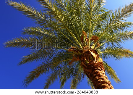 The view from the bottom to the top of a palm tree, illuminated by the bright sunlight - stock photo