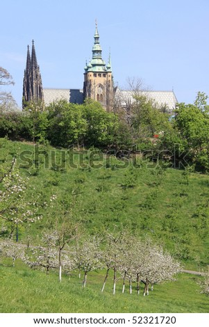 The View on the Prague's gothic Castle with flowering trees and grass