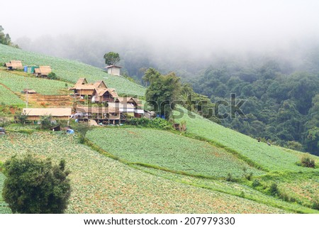 The village on mountain surrounded by the fields of cabbage,trees and mist at Phu Thap Boek, Phetchabun Province in Thailand