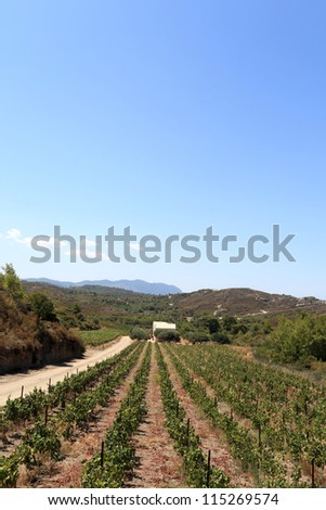 The vineyard in valley, Rhodes island, Greece - stock photo