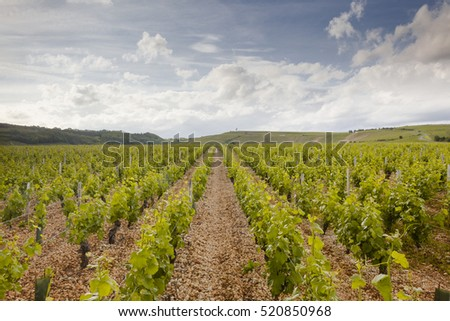The vineyards of Sancerre in the Loire Valley, France.