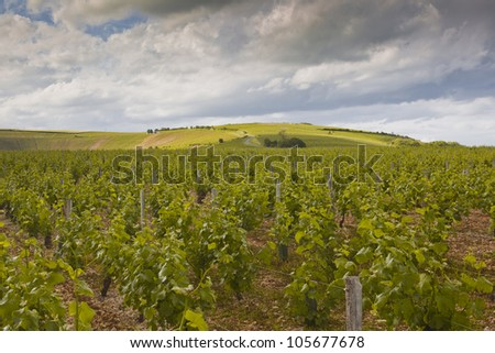 The vineyards of Sancerre in the Loire Valley of France.