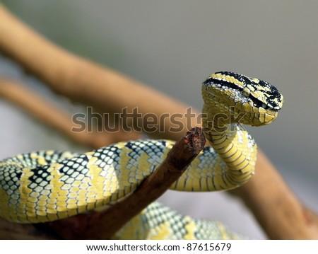 the viper - stock photo
