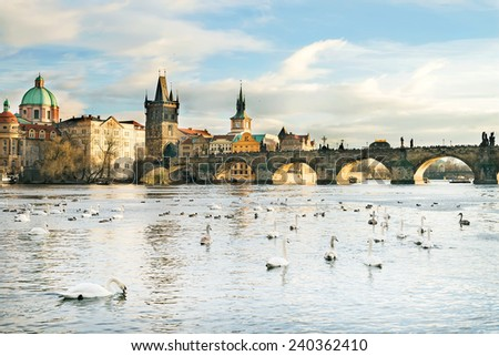 The Vltava river, Charles bridge and white swans in Prague, Czech Republic, on a clear sunny day - stock photo