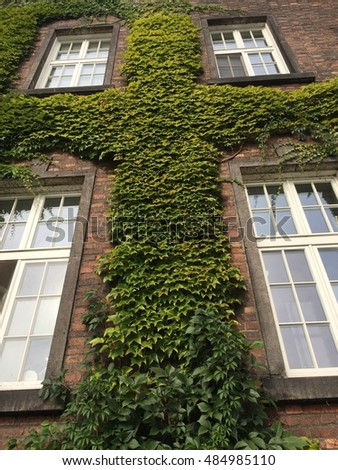 The wall of bricks with the ivy
