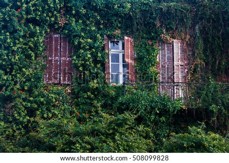 The wall of the old collapsing house which have grown with an ivy, Greece