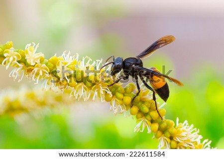 The Wasp Palm Pollination  - stock photo