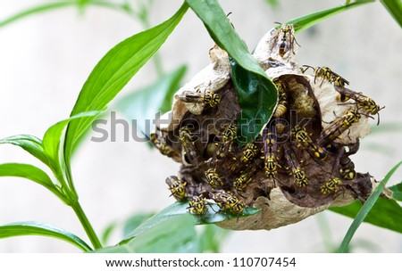 the wasps on comb - stock photo