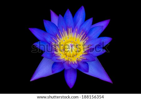 The water lily isolated on black background