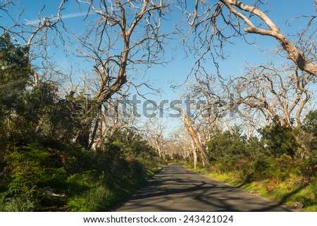 the way in forest - stock photo