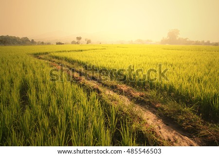 The way to rice field with morning light. walk way to paddy field. Mae Chaem, Chiang Mai, Thailand