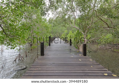 the way use to relax or study nature mangrove forest at Rayong, Thailand