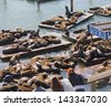 The well known Pier 39 in San Francisco with sea lions. Animals are resting on wooden platforms. - stock photo