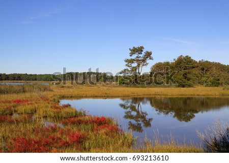 The wetlands during the fall