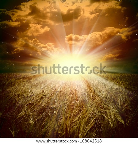 The wheat field and sunset - stock photo
