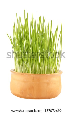 The wheat plant in the ceramic bowl - stock photo