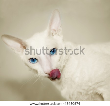 The white cat - stock photo