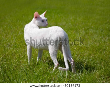The white cat outdoor - stock photo