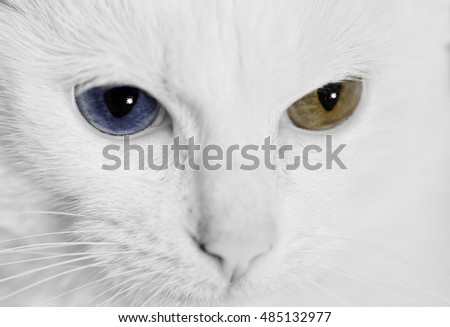 the white cat with minnow eyes