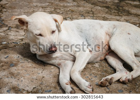 The white dog wake up with sunlight