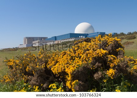 The white dome of Sizewell B nuclear power station, stands out against a blue sky. Bright yellow gorse in foreground.